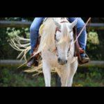 Pferdebild ©Sarah Schwarz