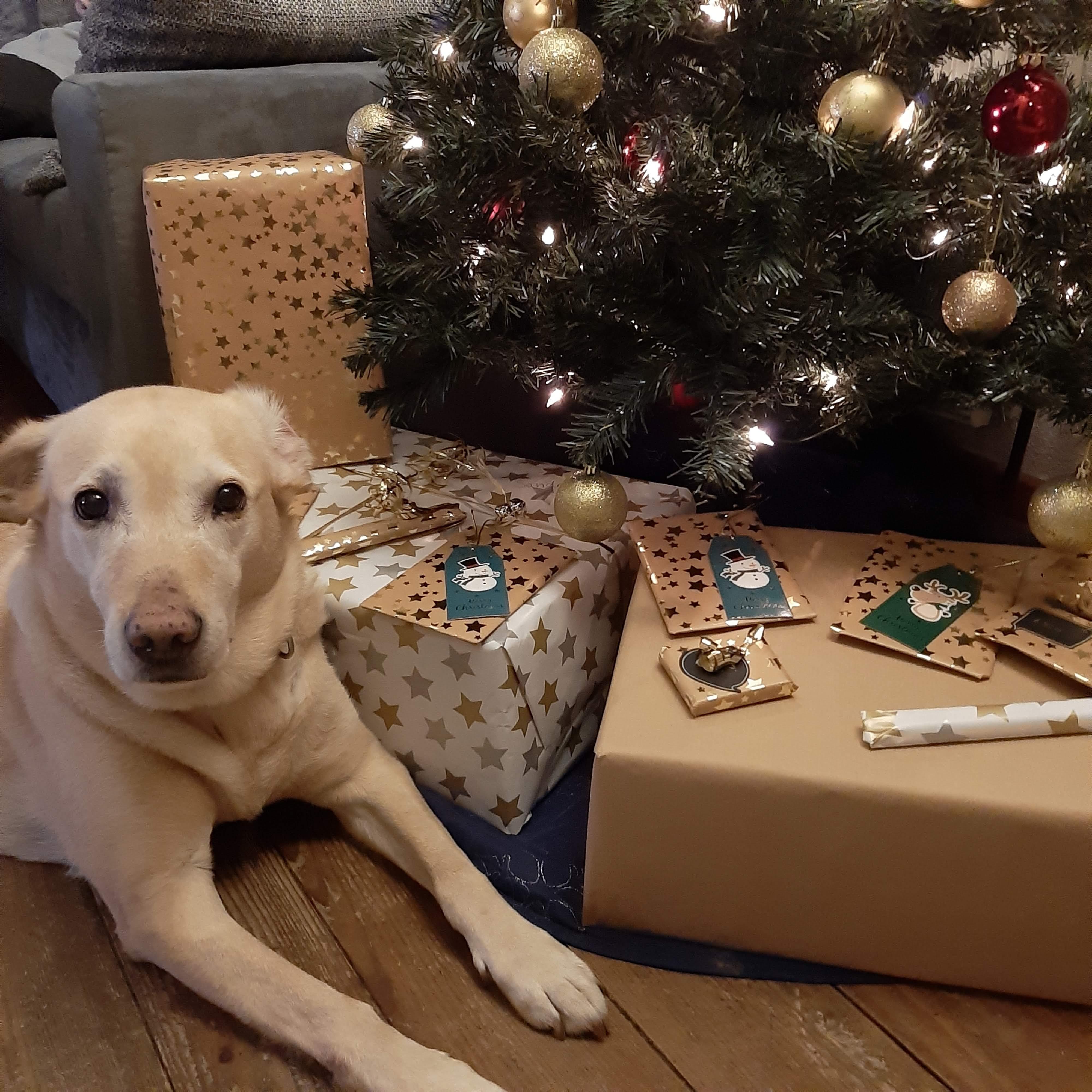 Sandy unterm Weihnachtsbaum